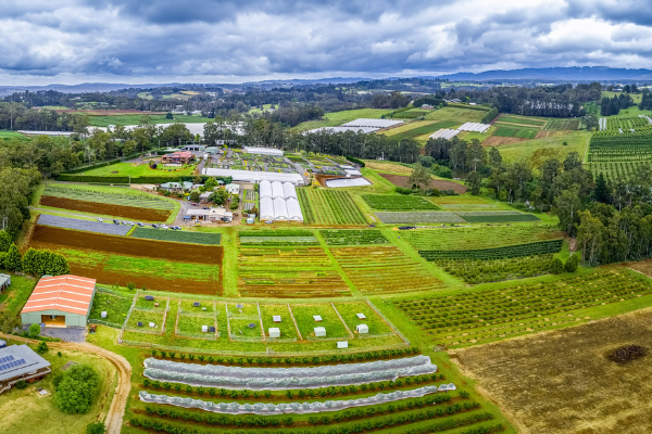 Arial view of farming land in Wandin East